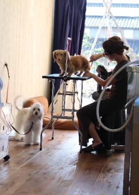 富山市大沢野:おしゃれな犬の美容室BARBER DOGさんへ行ってきた