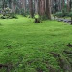 福井の癒し系観光スポット見つけた!北陸の苔寺 白山平泉寺