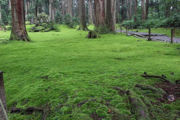 境内:福井の癒し系観光スポット見つけた!北陸の苔寺こと平泉寺白山神社