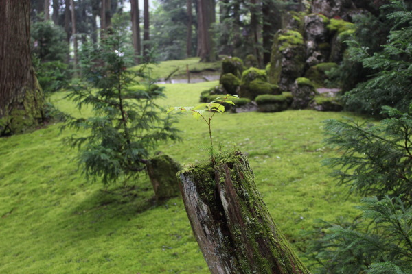 苔木:福井の癒し系観光スポット見つけた!北陸の苔寺こと平泉寺白山神社