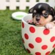 コップに犬:川崎市で犬のトリミングサロンならDOG★ONE(ドッグワン)さん