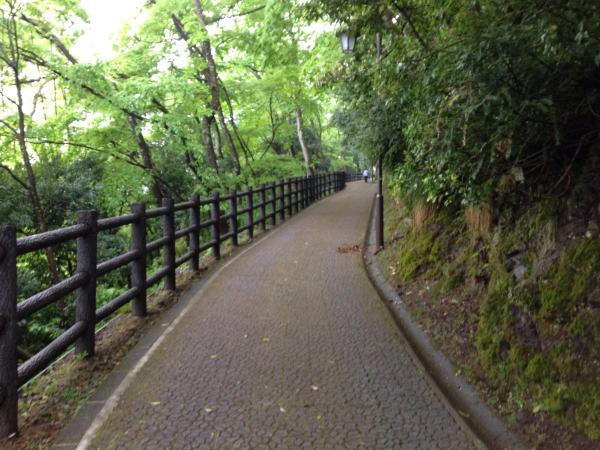 道 福井観光:片道20分で程良いハイキングするなら越前大野城