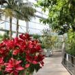 内観1 富山観光:氷見市海浜植物園でパイナップルの生態を知る