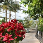 富山観光:氷見市海浜植物園でパイナップルの生態を知る