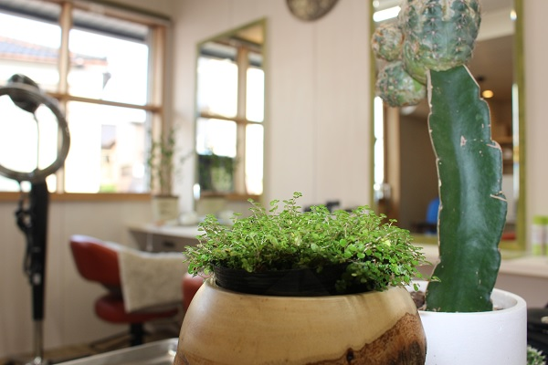 植物:南砺市福野の美容室 Aterace hair(アテラス ヘア)様パンフレット作成