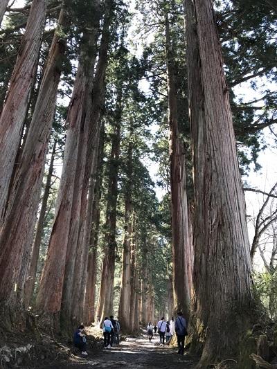 パワースポット探訪:春の戸隠神社(奥社)参拝で注意する点