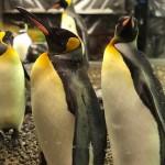 料金高いなりに楽しめます♪福井県の越前松島水族館へ!