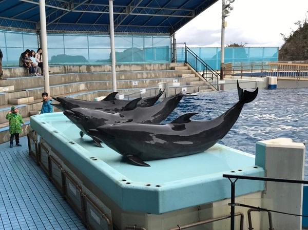 イルカショー 福井県越前松島水族館