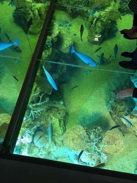ガラス床水槽 福井県越前松島水族館