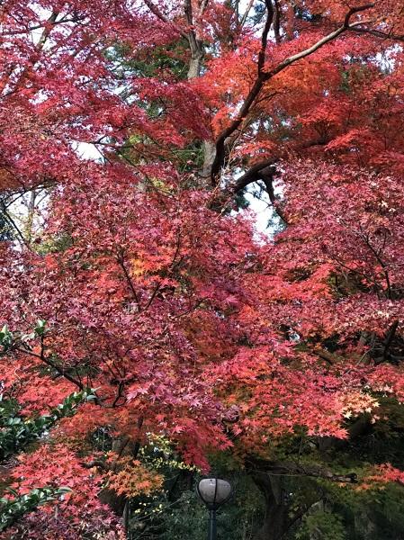 石川で、紅葉なら山中温泉鶴仙渓(かくせんけい)