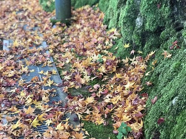 道路 石川で、紅葉なら山中温泉鶴仙渓(かくせんけい)