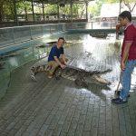 ワニに馬乗りして、虎と戯れる。タイ旅行四日目。