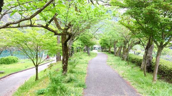 スタート付近 南砺市でお勧めランニング&ウォーキングなら庄川水記念公園遊歩道
