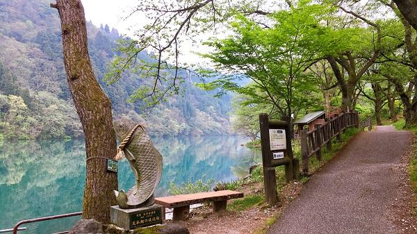鯉? 南砺市でお勧めランニング&ウォーキングなら庄川水記念公園遊歩道