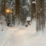 冬の雄山神社芦峅中宮(スキー場近く)は雪路で雰囲気良し