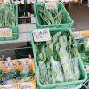 開放感抜群!トラットリアサッチさんで野外イタリアンランチ 無農薬野菜
